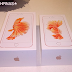 Apple iPhone 6S Plus vs. Apple iPhone 6S Size and Specs Comparison, Side by Side Photos : Both Arriving via Smart Postpaid on November 6, 2015