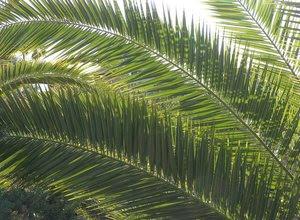 analisis-daun-kelapa-sawit.jpg