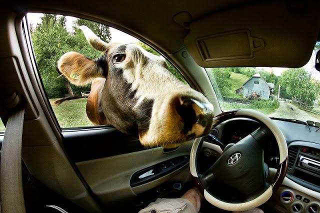 funny animals, funny photos of animals, animal photos