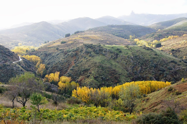 Zona de ribera de río en otoño. Hikergoer.   http://www.panoramio.com/photo/98785221