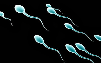 sperm semen,Male Birth Control Gel