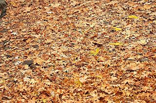 NATURAL TEXTURES leaves.jpg