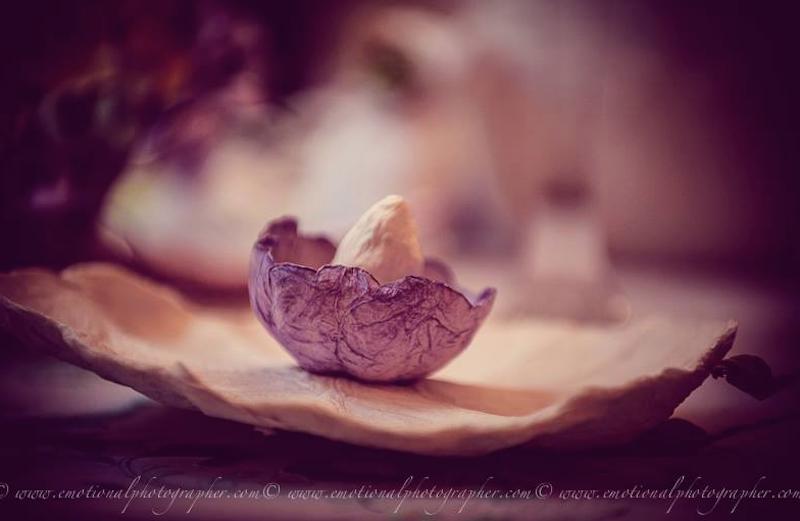 fiore di carta lilla