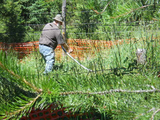 Landscaping Bark Kalispell : Off grid self sufficient montana homestead life july