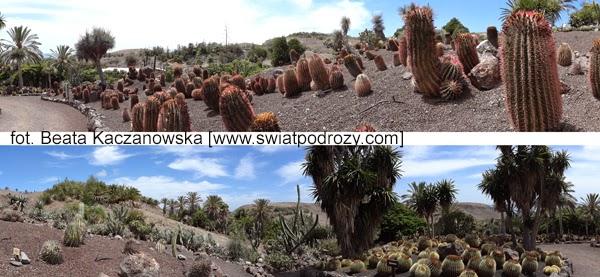 ogród botaniczny kaktusy