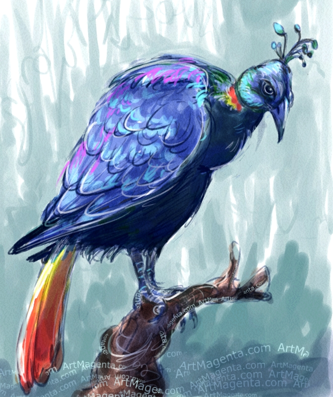 Himalayan Monal sketch painting. Bird art drawing by illustrator Artmagenta