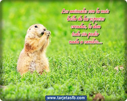 de conejo con frases lindas para facebook bonitas tarjetas con