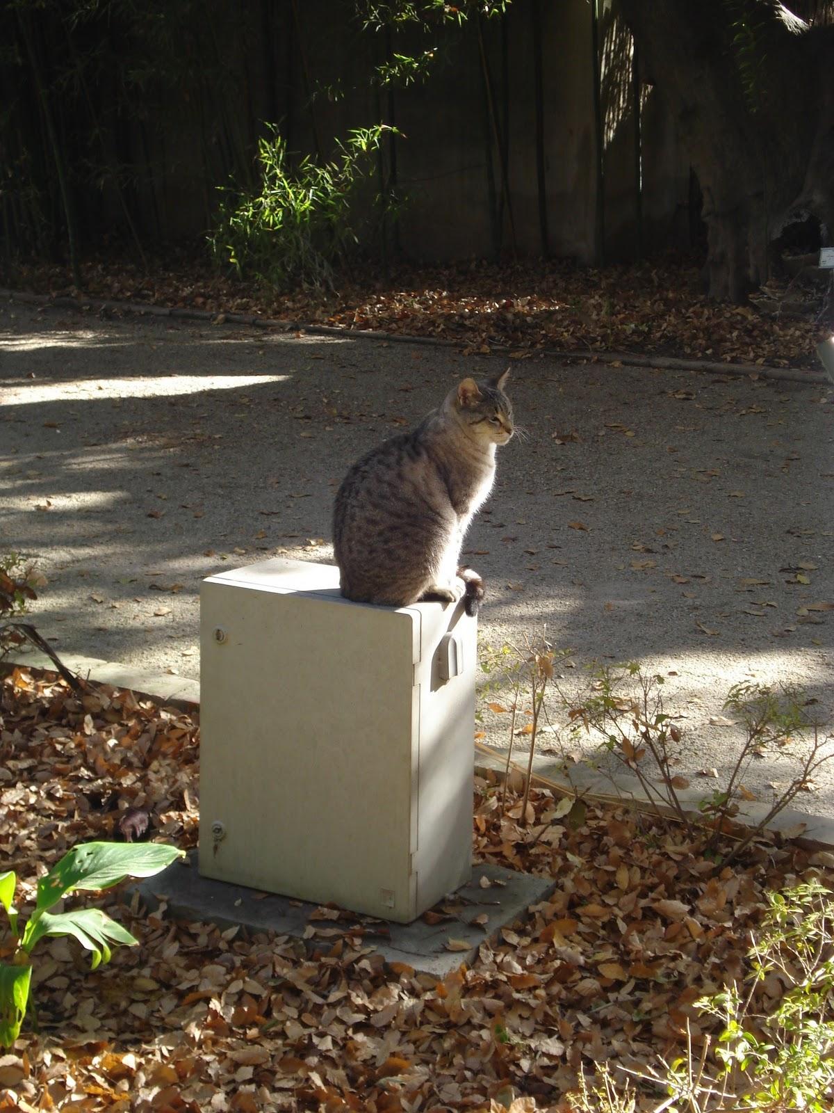 Chic souffl los gatos del jard n bot nico for Ahuyentar gatos jardin