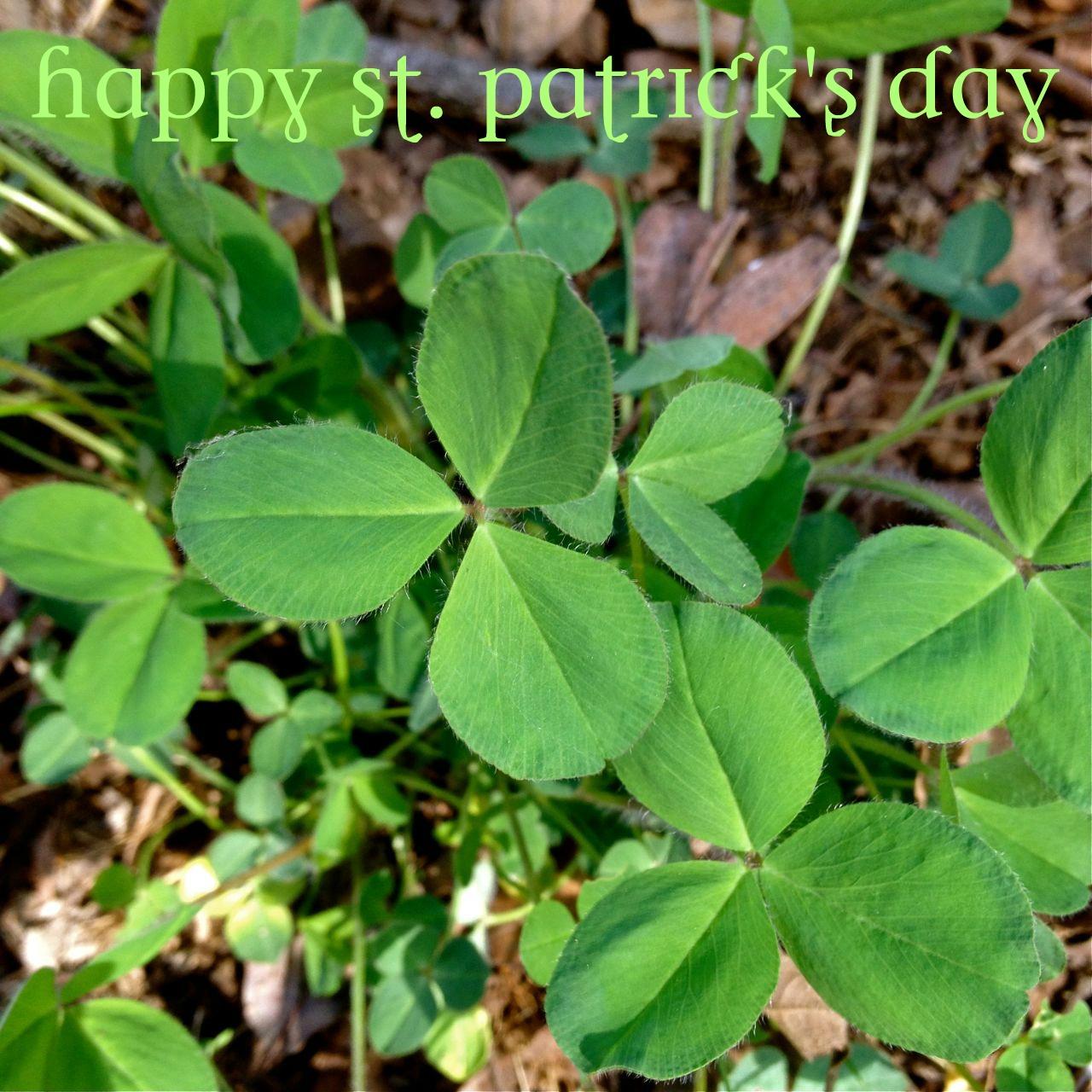 Shamrocks and artichokes happy st patrick s day - Shamrock houseplant ...