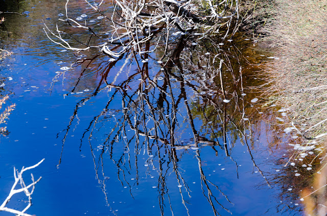 reflections on first wannon creek