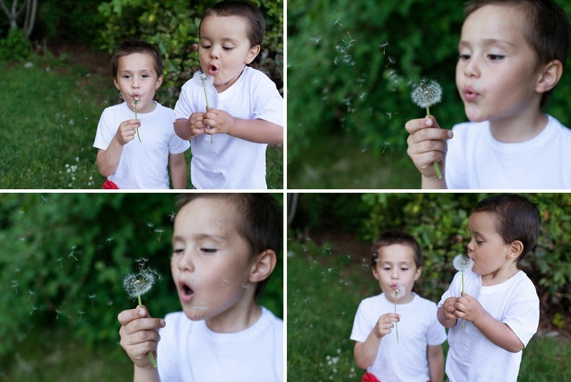 blowing on a dandelion photo
