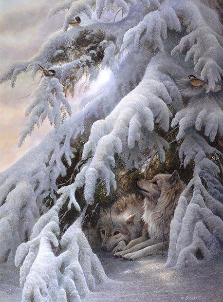 White Wolf Duane Geisness Talented Midwestern Wildlife