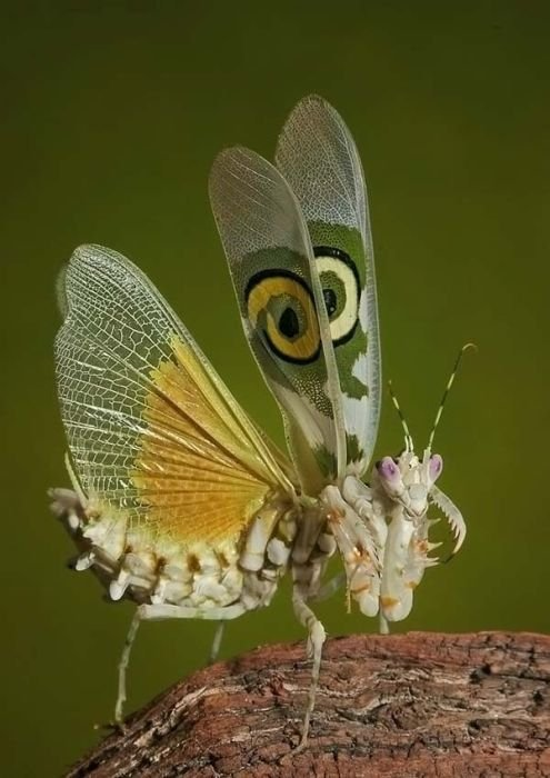 Amazing High Quality Photos Of Insects Seen On www.coolpicturegallery.us