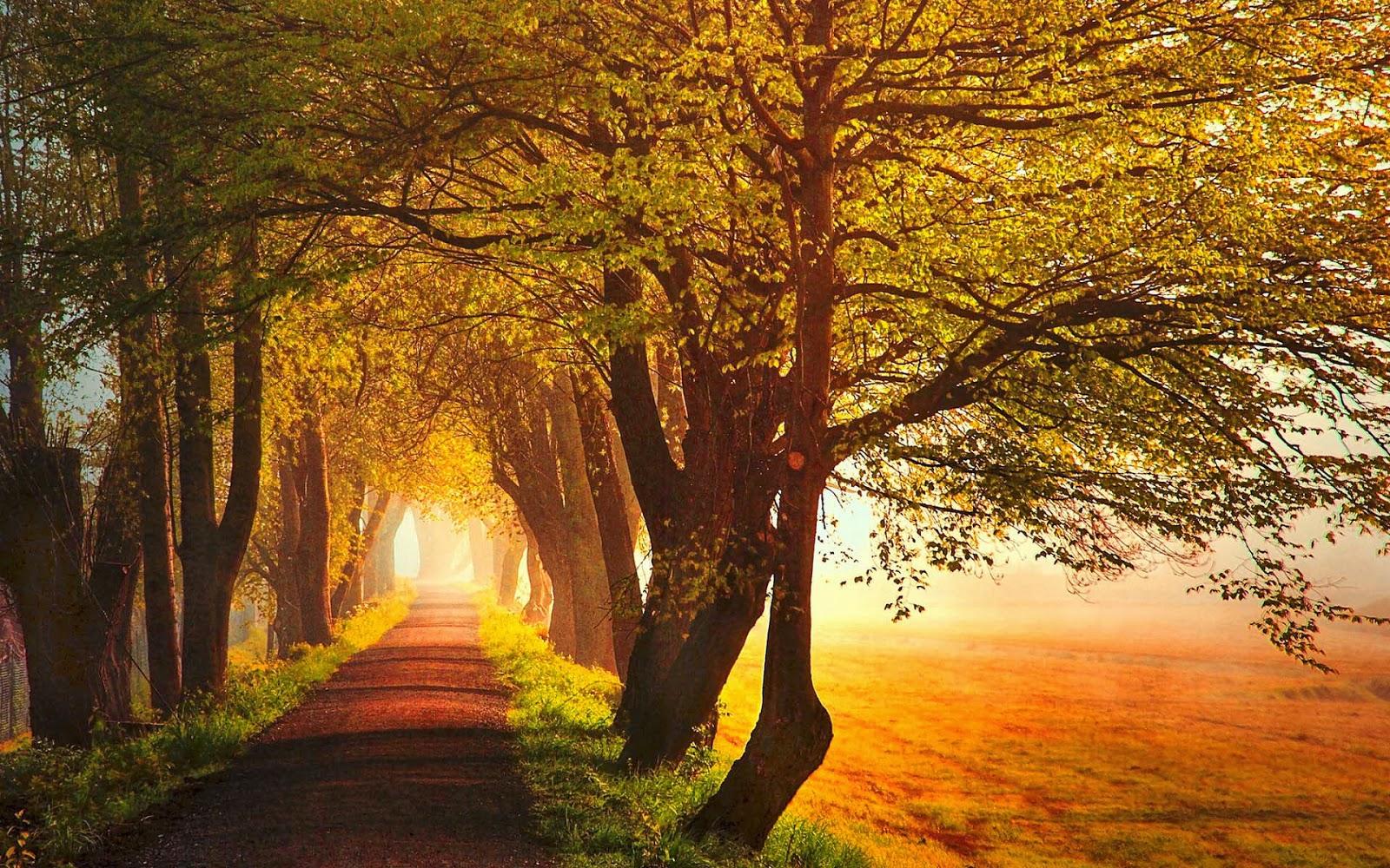Citaten Herfst Gratis : Herfst wallpapers herfstfoto s mooie leuke