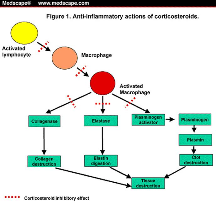 cara kerja kortikosteroid adalah