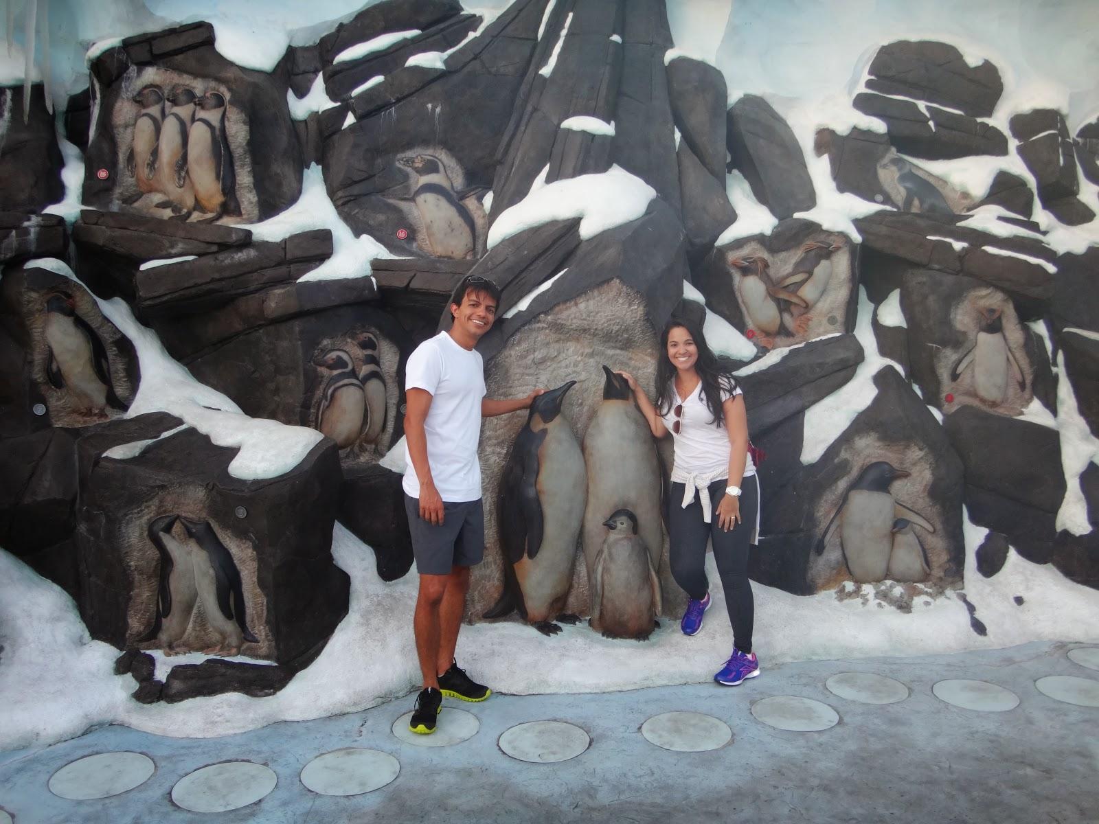 pinguins - penguin encounter - parque sea world - orlando, florida