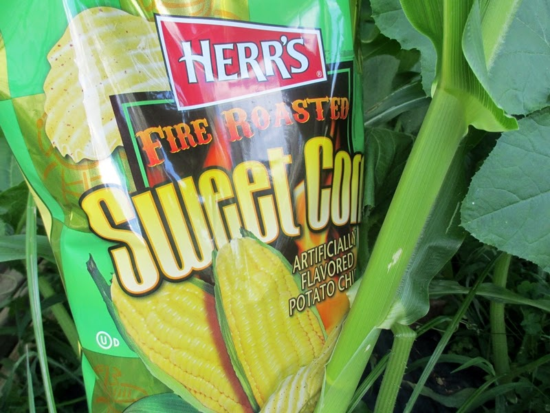 Bag of Fire Roasted Sweet Corn Chips in Garden