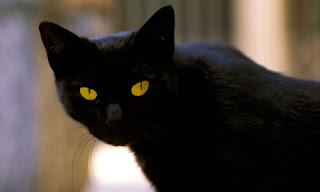Tommaso Cat