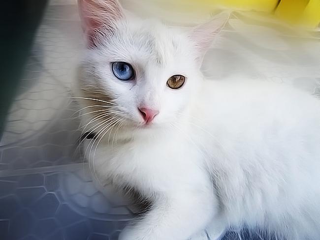 Fotos Com Cameras Compactas - Fotos de Gatos