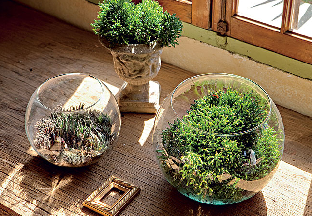 mini jardins no vidro:Carol Previatello _ arquitetura: Idéias para Jardim e Horta em