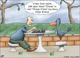 bird playing chess