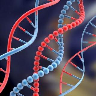 Resultado de imagen de Macromoléculas de ADN