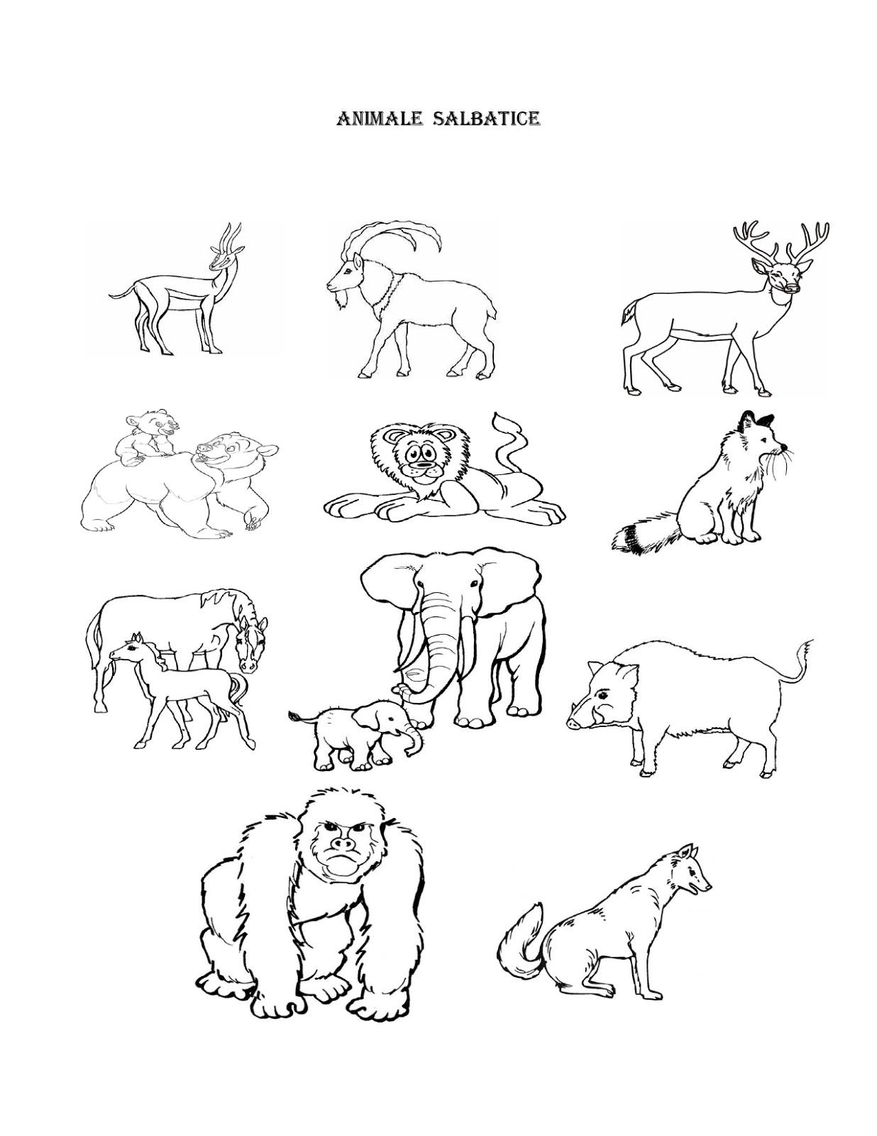Animale Salbatice Daca Doriti Si Imagini Cu Animale Domestice Apasati