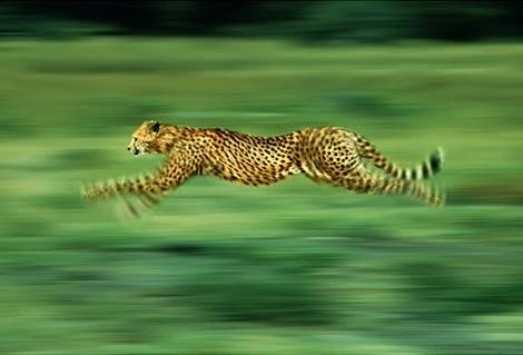 binatang dengan kemampuan luar biasa