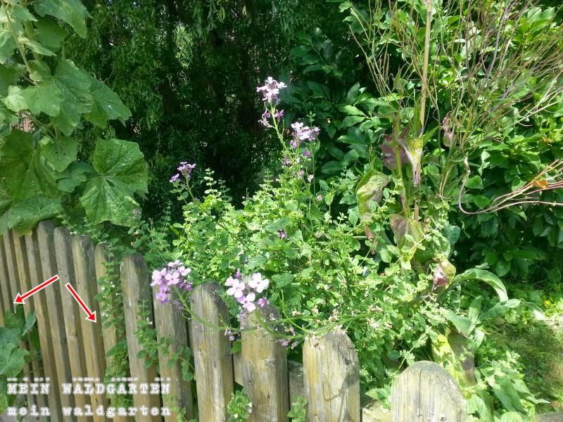 mein waldgarten umgang mit pflanzen die ber den zaun ragen. Black Bedroom Furniture Sets. Home Design Ideas