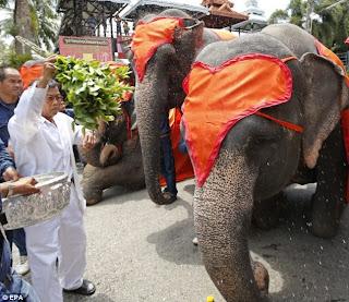 thialand elephant day