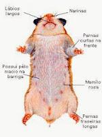 hamster doença