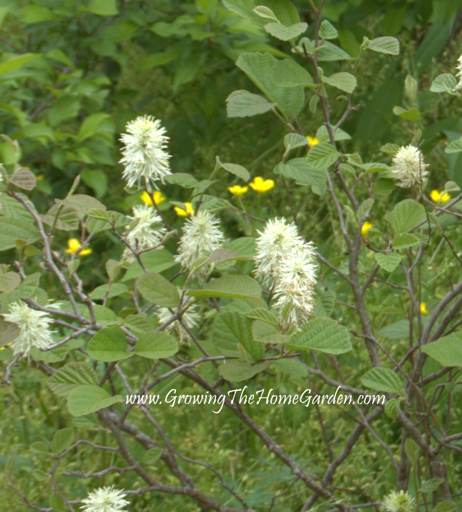 5 Neat Native Plants Growing The Home Garden