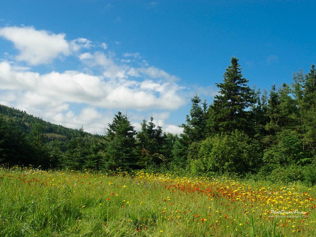 http://2.bp.blogspot.com/-taUExruiudI/TdeneTA_qVI/AAAAAAAADfU/sg8BsResMrw/s1600/Meadow+Wallpaper__yvt2.jpg