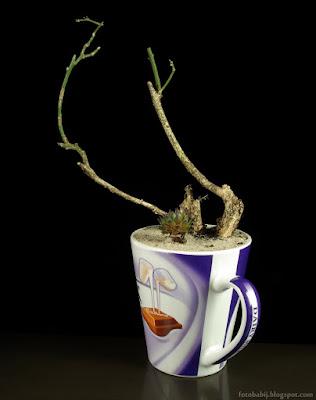 http://fotobabij.blogspot.com/2015/04/materia-na-bonsai.html
