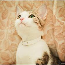 cat, cute, meow