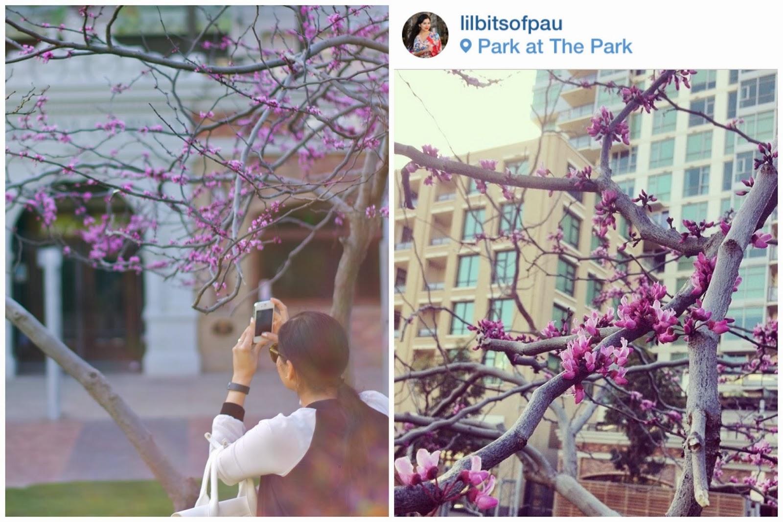 lilbitsofpau instagram, bts instagram lilbitsofpau, @lilbitsofpau