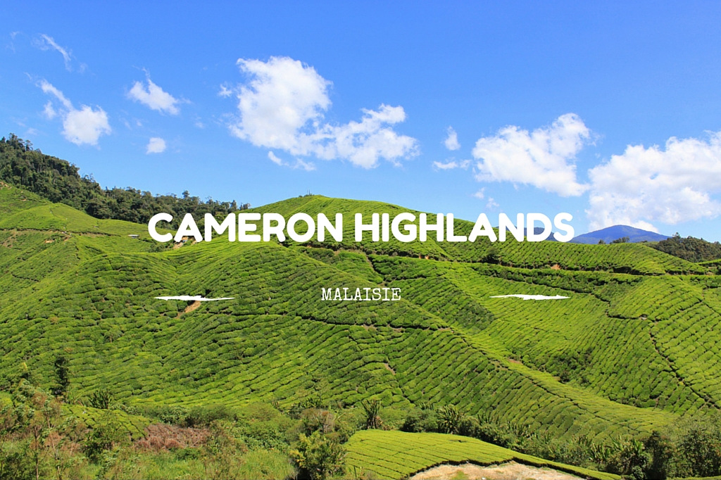 Cameron Highlands - Plantation de thé