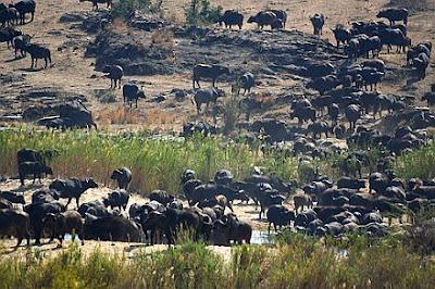 kruger national park africa
