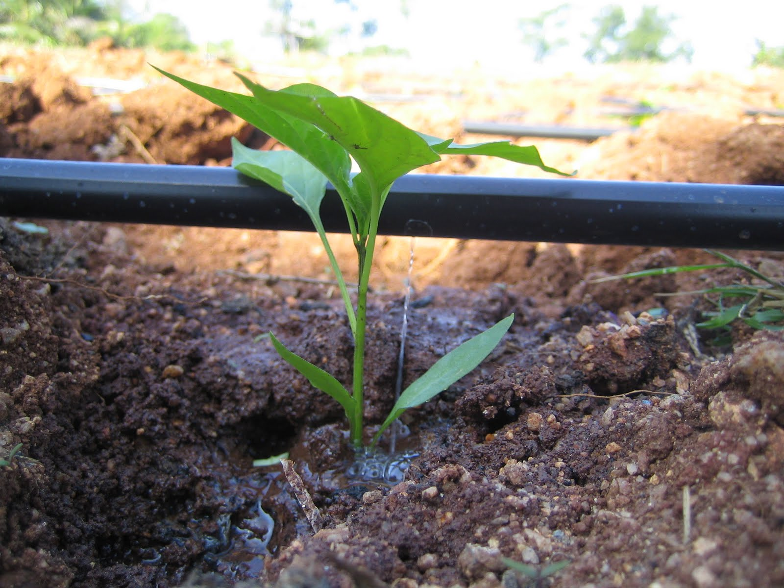 irrigation methods in india pdf