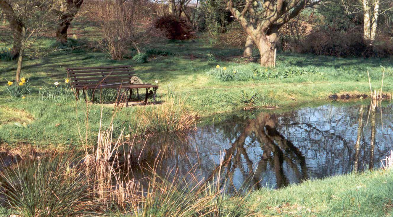 Venymira estanques preguntas y respuestas a mi mismo for Estanque natural