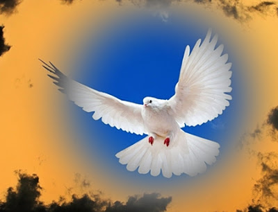 White dove a messenger from the dead