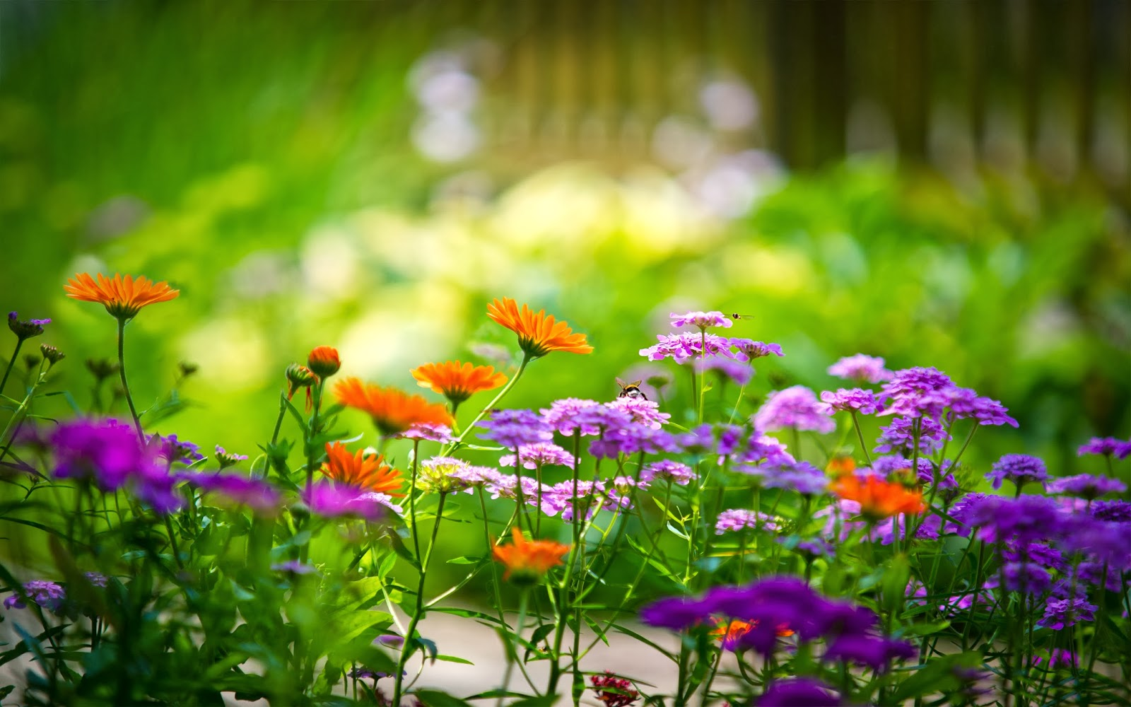 Flowers wallpapers Android