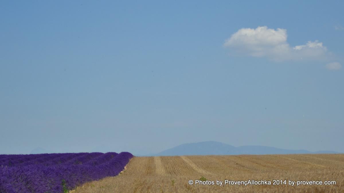 provence,blé,lavande
