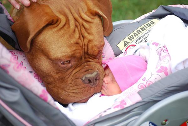 Cún cưng và bé yêu