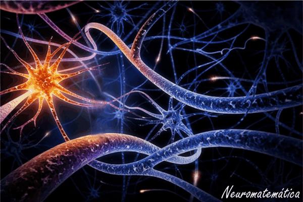 NeuroMat - Centro de Pesquisa, Inovação e Difusão em Neuromatemática