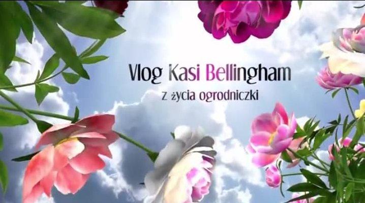 VLOG Kasi Bellingham