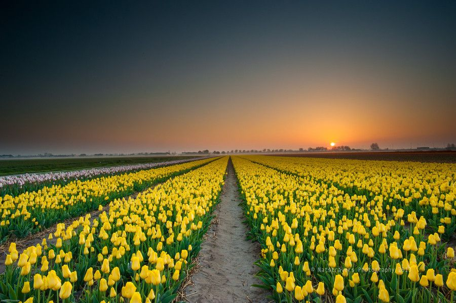 17. Sunrise at Lisse 5th of may 2013 by Nathalie Stravers