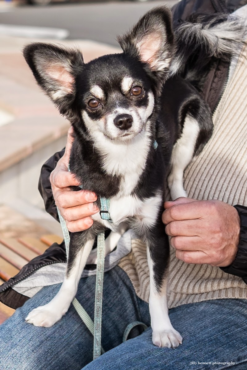 chihuahua senior personals Individual game tickets sorry, no tickets are available at this time please check back soon, and in the meantime visit our homepage for all the info you need.
