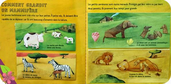 """Kididoc """"Les bébés animaux"""" de Sylvie Baussier, cécile Gambini et Anne Eydoux"""