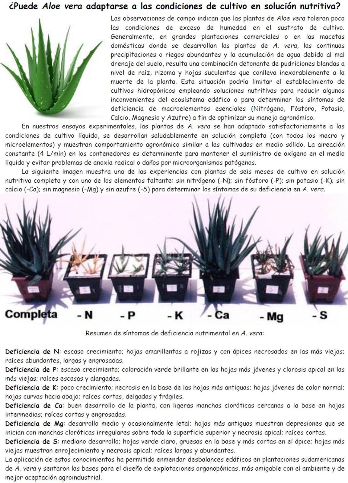 Aloe vera en solución nutritiva